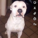 Dog Walker, Pet Sitter in Barrie