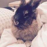 Hiring: Pet sitter who loves bunnies!