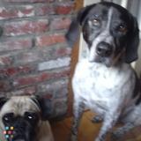 Dog Walker, Pet Sitter in Newburyport