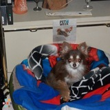 Dog Walker, Pet Sitter in Cocoa