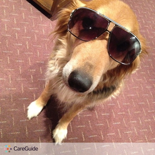 Pet Care Provider Isabel De Avila's Profile Picture