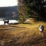 Dog Walker, Pet Sitter in Whistler