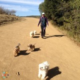 Dog Walker, Pet Sitter in San Leandro