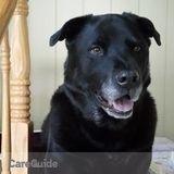 Dog Walker, Pet Sitter in Kings Park