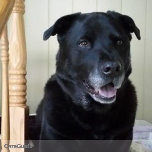 Pet Care Provider Nicole Carroll's Profile Picture