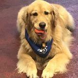 Full Time Pet Sitter/Certified Vet Assistant