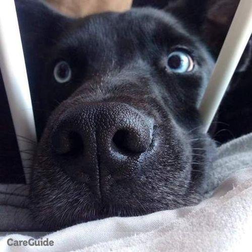 Pet Care Provider Joshua C's Profile Picture