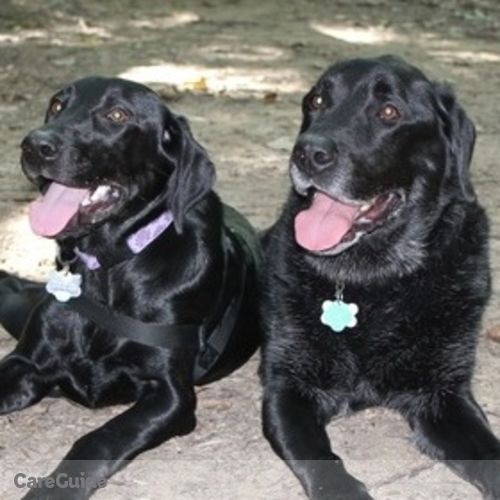 Pet Care Job Gina Dutton's Profile Picture