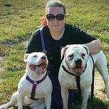 Certified Dog Trainer Offering Professional Dog training/Walking/Walk&Train/Enrichment