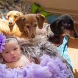 Loving Animal Caregiver in Milton, Ontario