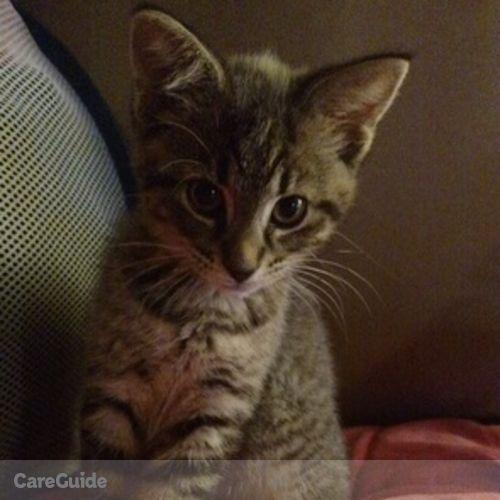 Pet Care Provider Rebecca G's Profile Picture
