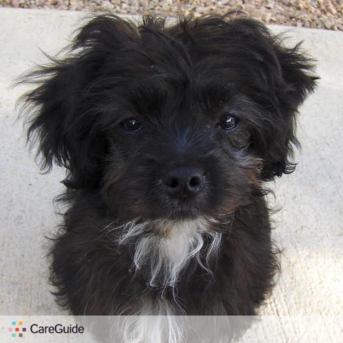 Pet Care Provider Sara Sacks's Profile Picture