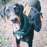 Dog walking, pet sitting and overnight care!