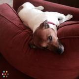 Thanksgiving weekend dog helper needed!