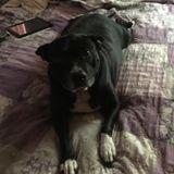 Reliable Animal Caregiver in Corpus Christi