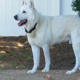 Dog Walker, Pet Sitter in Cape May
