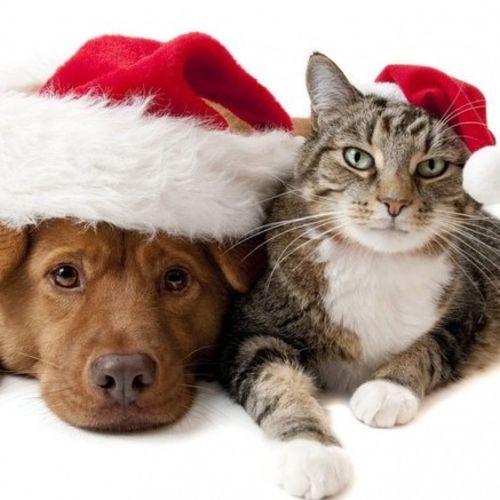Pet Care Provider Marie Renaud's Profile Picture
