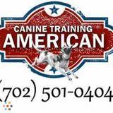Pet Care Provider in Henderson