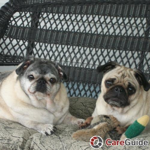 Pet Care Provider Paw Prints S's Profile Picture