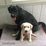 Dog Walker, Pet Sitter in Medfield