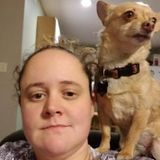 Looking for a Walker and Sitter to Care for a Sweet Chihuahua