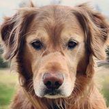 Dog Walker, Pet Sitter in Spruce Grove