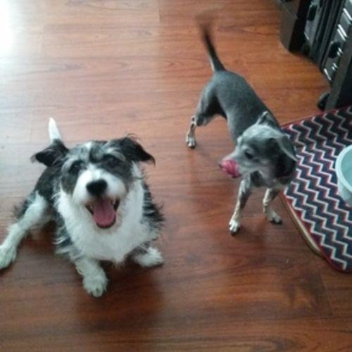 Pet Care Provider Kristen Earhart Gallery Image 3
