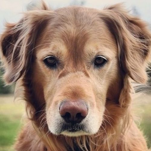 Pet Care Provider Addison Brown's Profile Picture