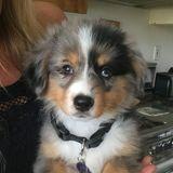 Dog lover, very experienced, calm, fun