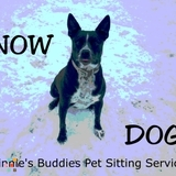 Dog Walker, Pet Sitter in Covington