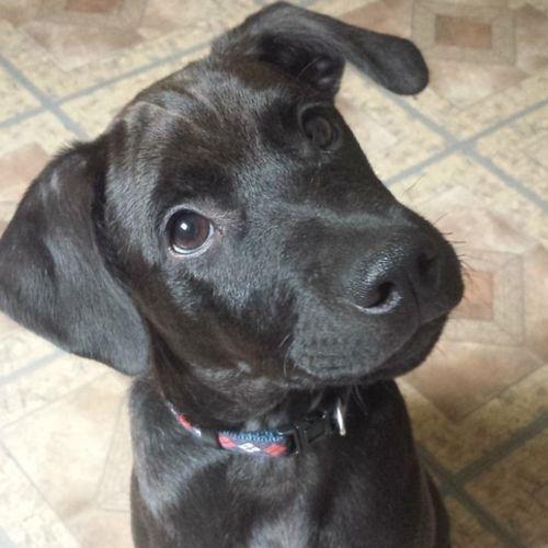 Pet Care Provider Cynthia O's Profile Picture