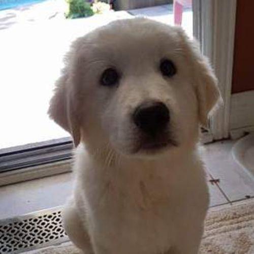 Pet Care Provider Briana Gunning's Profile Picture