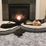 Puyallup Pet Sitter Available For Work