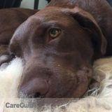 Dog Walker, Pet Sitter in Victoria