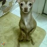 Dog Walker, Pet Sitter in Queens Village