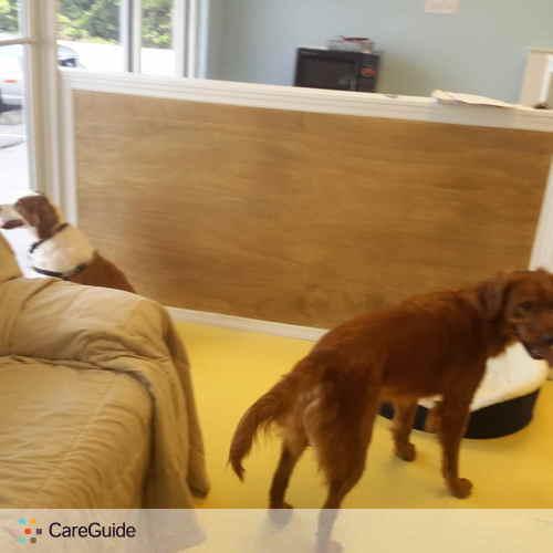 Pet Care Provider Michael Wilson's Profile Picture