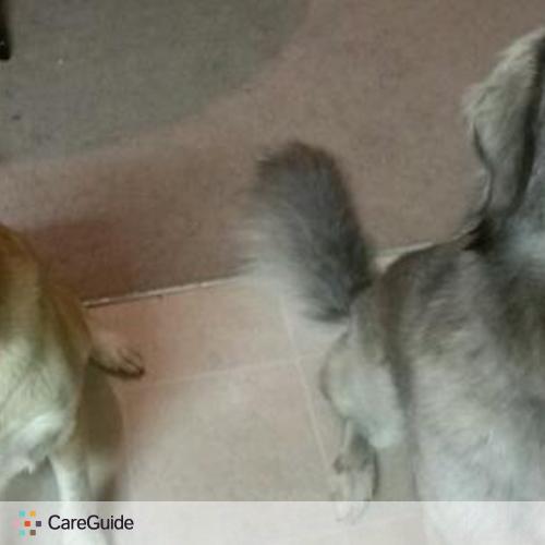 Pet Care Provider Katie Wimmer's Profile Picture