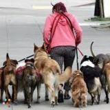 Dog Walker, Pet Sitter in Alliance