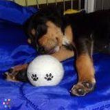 Dog Walker, Pet Sitter in Litchfield Park