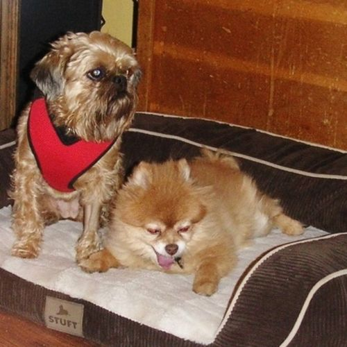 Pet Care Provider Munster Abbey Gallery Image 3