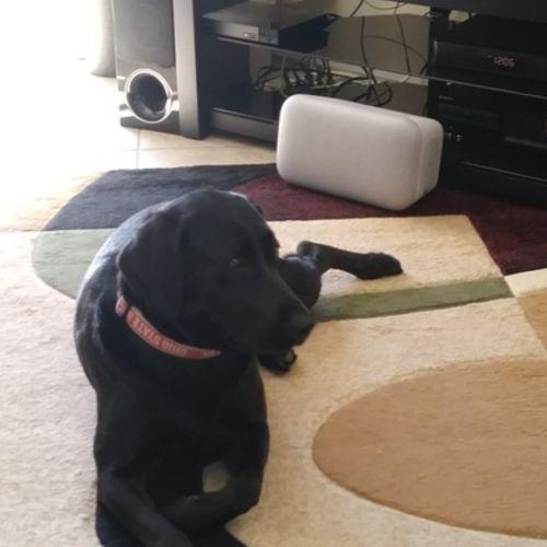 Pet Care Provider Lisa S's Profile Picture