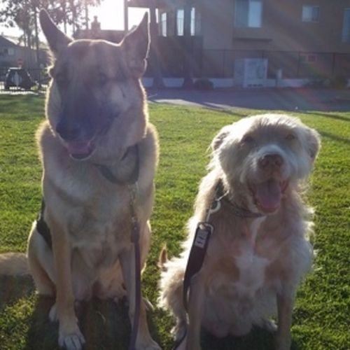 Pet Care Provider Kristen Earhart Gallery Image 1