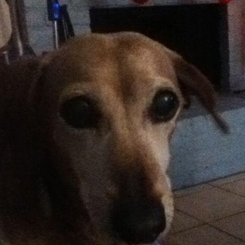 Dog sitter/ Care provider
