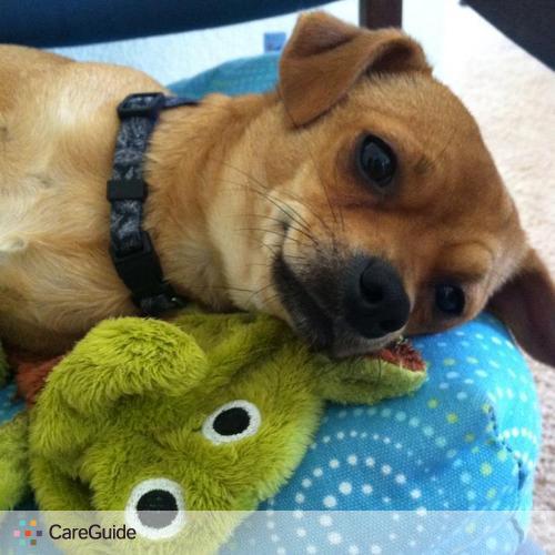 Pet Care Provider Daniel Watson's Profile Picture