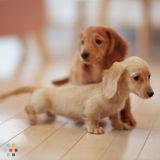 Dog Walker, Pet Sitter in Chardon
