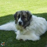 I Heart Lucy Pet Care (Experienced Veterinary Technician)