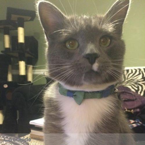 Pet Care Job Sapun N.'s Profile Picture