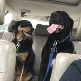 Job Opportunity: Mount Vernon, Ohio Dog Care