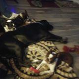 Nuturing Petsitter in Dahlonega. With flexible hours