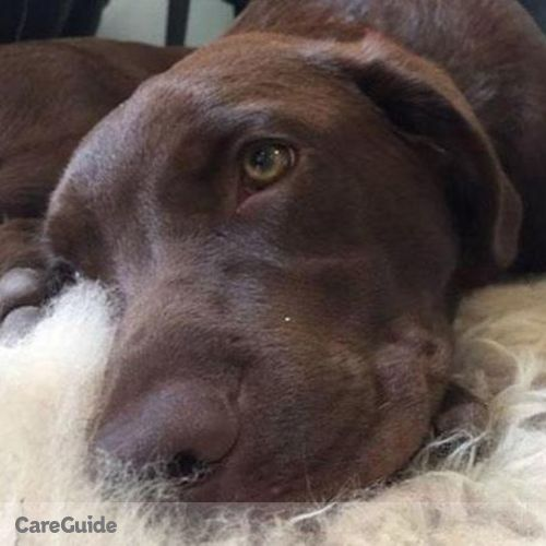 Pet Care Provider Nikayla K's Profile Picture